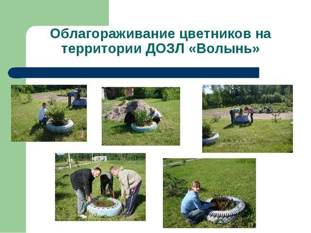 Облагораживание цветников на территории ДОЗЛ «Волынь»