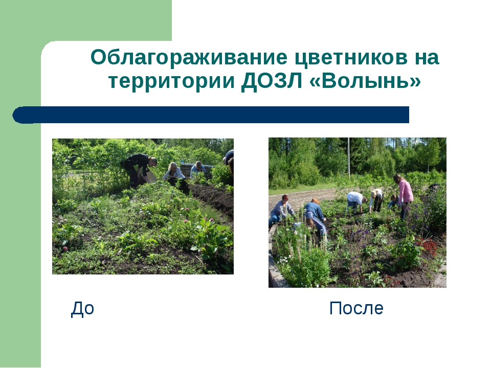 Облагораживание цветников на территории ДОЗЛ «Волынь» До После