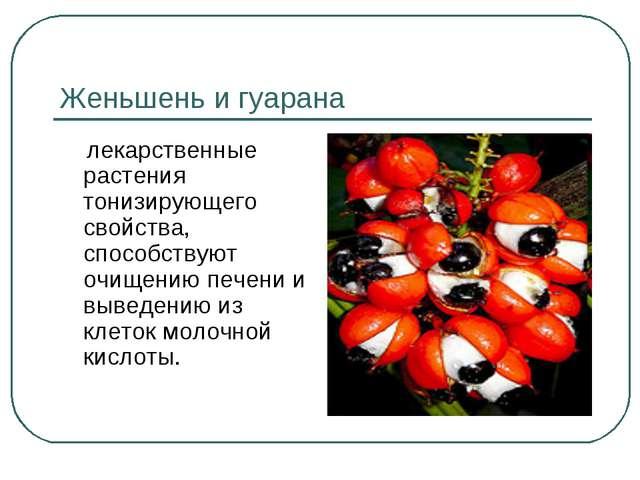 Женьшень и гуарана лекарственные растения тонизирующего свойства, способствую...