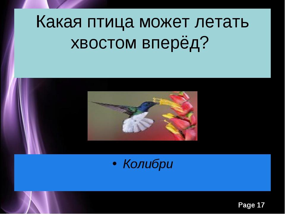 Какая птица может летать хвостом вперёд? Колибри Какая птица может летать хво...