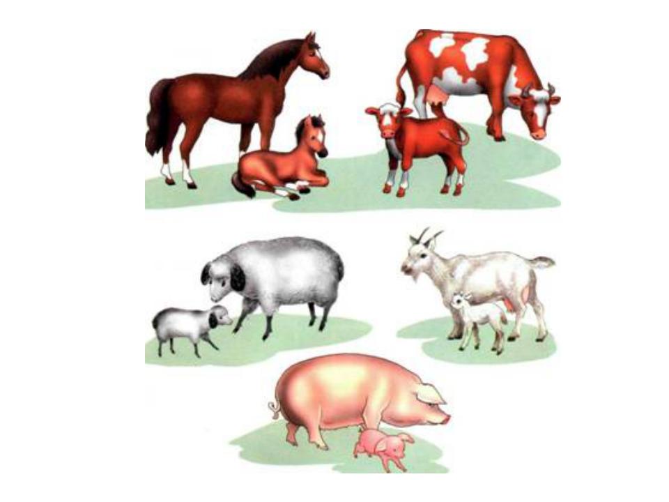 Картинки животные и их детеныши для детского сада