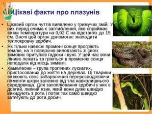 Цікавий орган чуттів виявлено у гримучих змій. У них перед очима є заглибленн