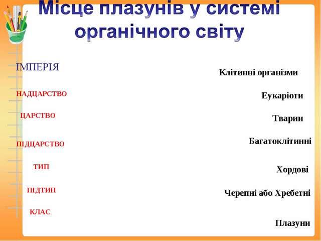 НАДЦАРСТВО ЦАРСТВО ПІДЦАРСТВО ТИП ПІДТИП КЛАС Клітинні організми Еукаріоти Тв...