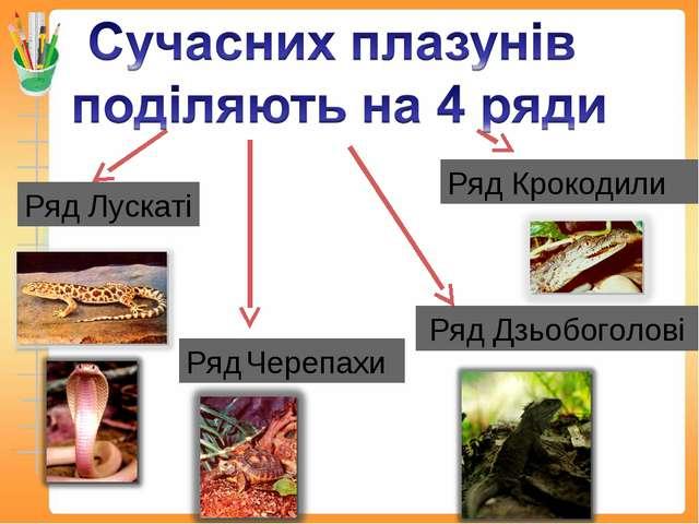Ряд Лускаті Ряд Черепахи Ряд Крокодили Ряд Дзьобоголові