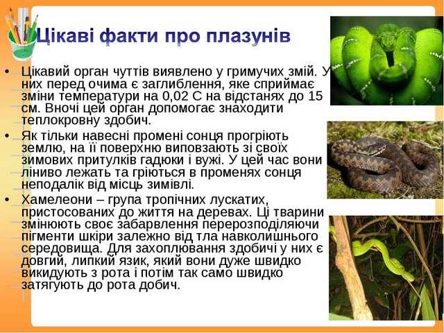 Цікавий орган чуттів виявлено у гримучих змій. У них перед очима є заглибленн...