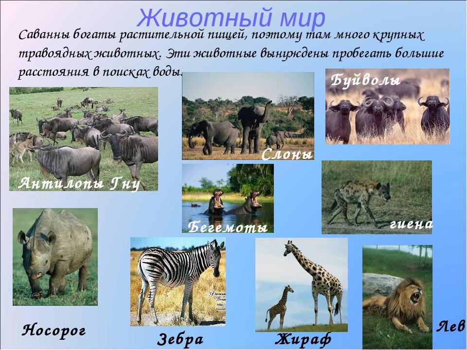 Реферат животный мир африки найдено в каталоге Реферат животный мир африки