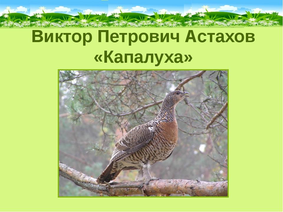 Виктор Петрович Астахов «Капалуха»