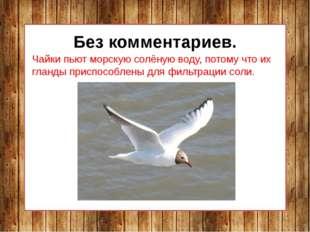 Без комментариев. Чайки пьют морскую солёную воду, потому что их гланды прис