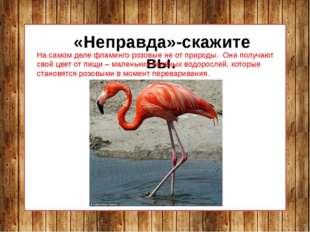 «Неправда»-скажите вы. На самом деле фламинго розовые не от природы. Они пол