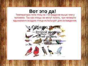 Температура тела птиц на 7-8 градусов выше чем у человека. Так как птицы не м