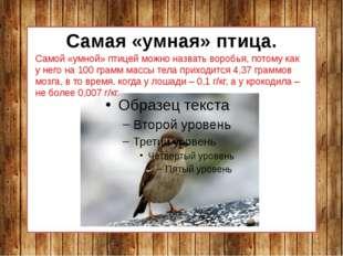 Самая «умная» птица. Самой «умной» птицей можно назвать воробья, потому как у