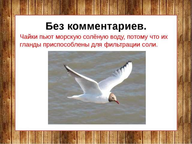 Без комментариев. Чайки пьют морскую солёную воду, потому что их гланды прис...
