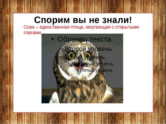 Спорим вы не знали! Сова – единственная птица, моргающая с открытыми глазами.