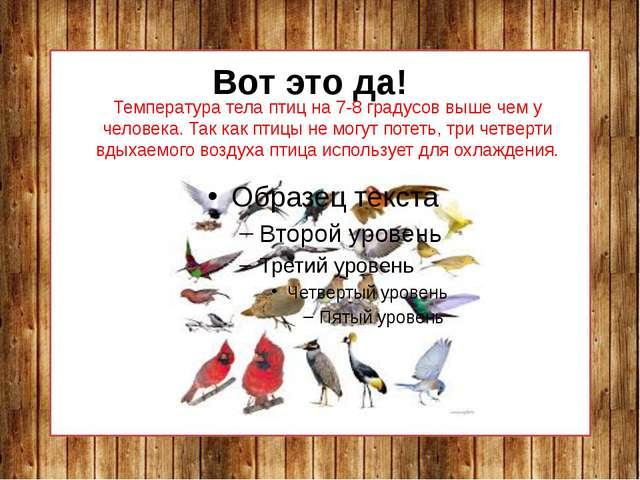 Температура тела птиц на 7-8 градусов выше чем у человека. Так как птицы не м...