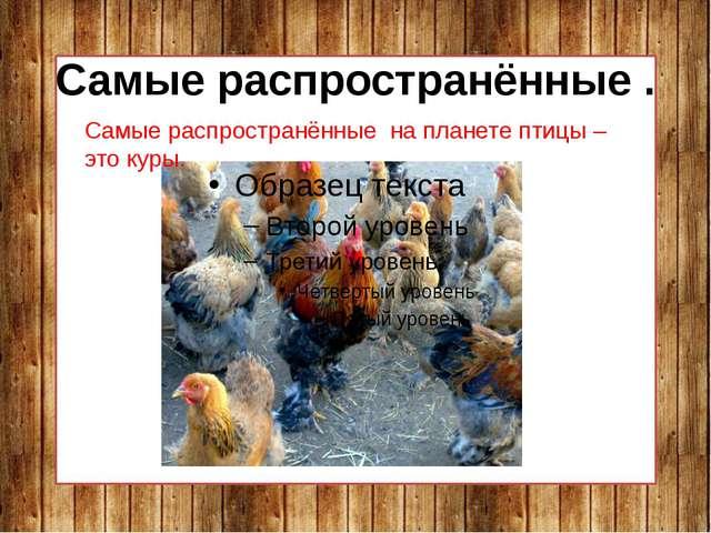 Самые распространённые . Самые распространённые на планете птицы – это куры.