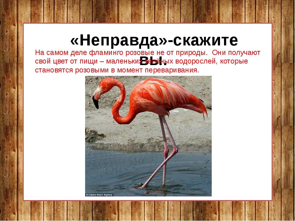 «Неправда»-скажите вы. На самом деле фламинго розовые не от природы. Они пол...