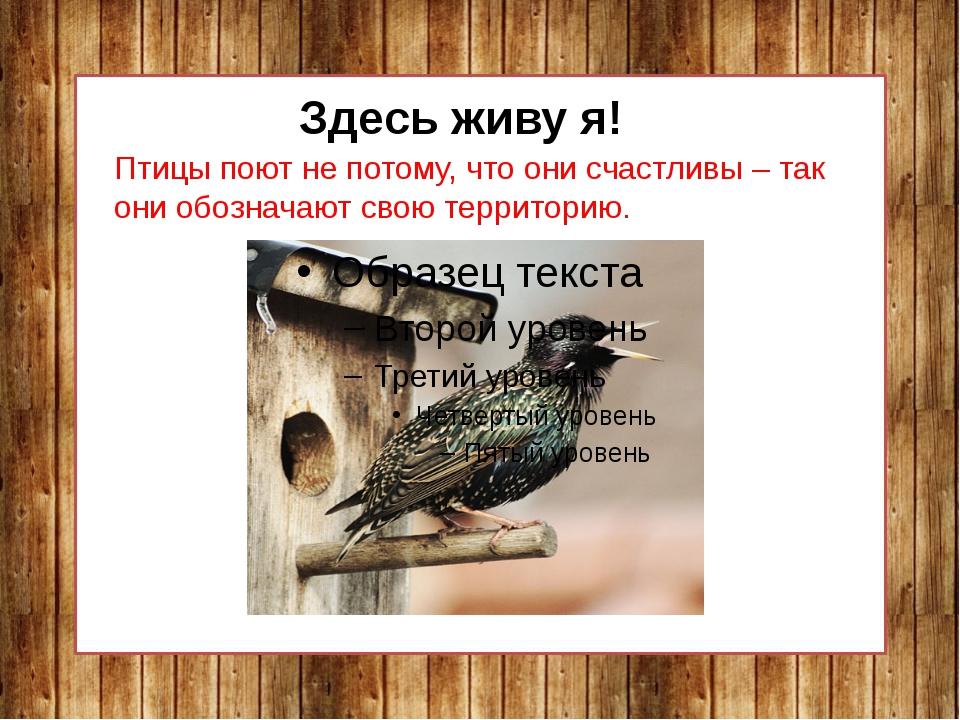 Здесь живу я! Птицы поют не потому, что они счастливы – так они обозначают св...