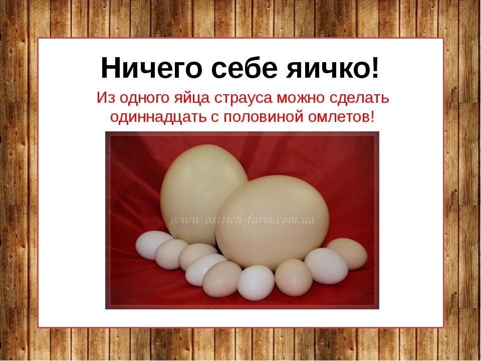 Ничего себе яичко! Из одного яйца страуса можно сделать одиннадцать с половин...