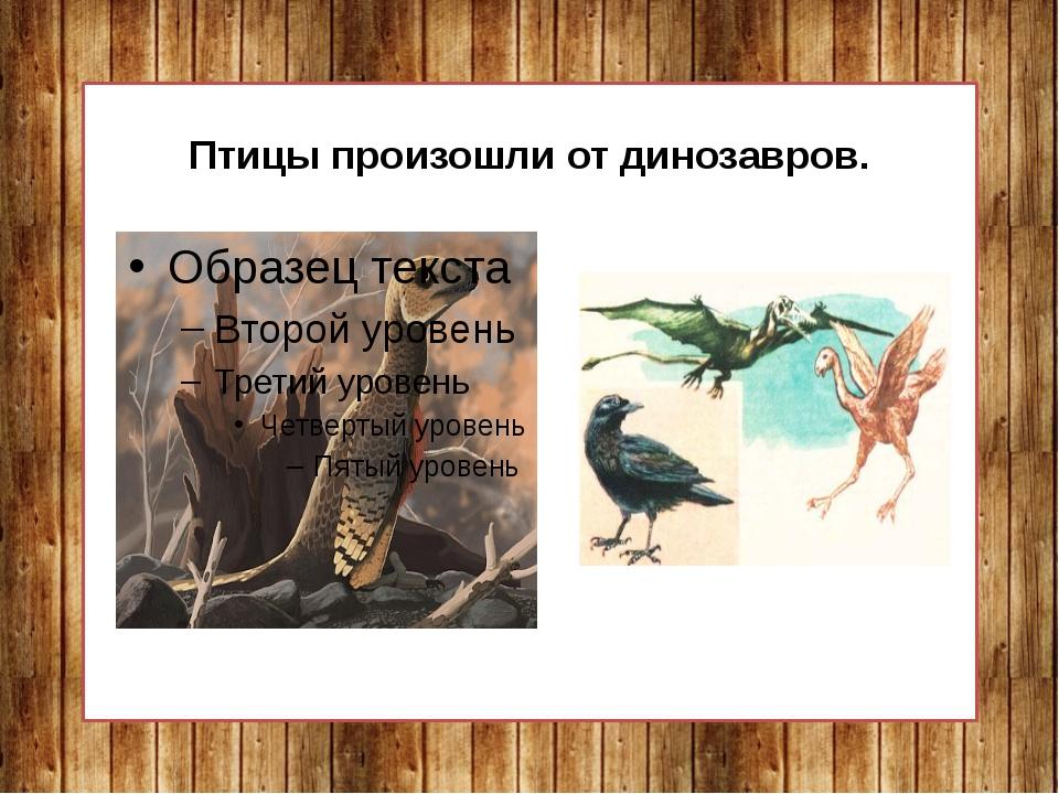 Птицы произошли от динозавров.