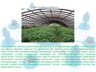 Картоп тұқымдасын алу технологиясы Басты міндеттер: апикальді меристеманы бөл