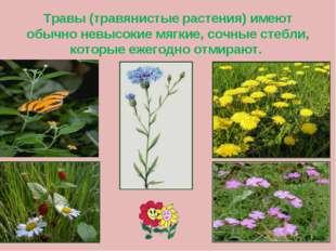 Травы (травянистые растения) имеют обычно невысокие мягкие, сочные стебли, ко