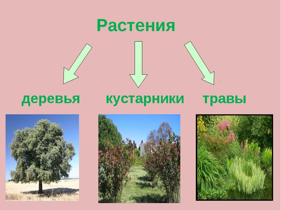 Картинки групп растений деревья кустарники и травы большие