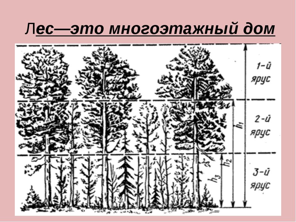 Лес—это многоэтажный дом
