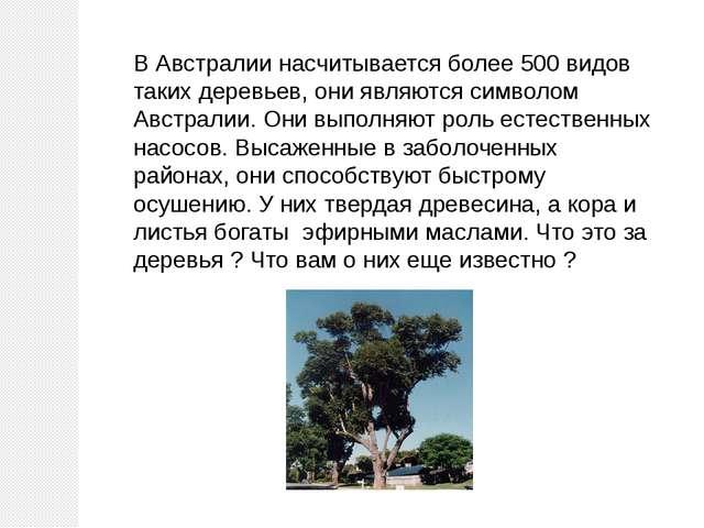 В Австралии насчитывается более 500 видов таких деревьев, они являются символ...