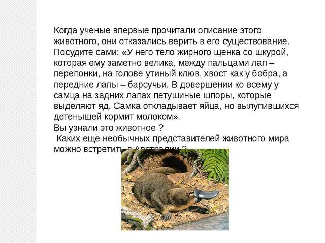 Когда ученые впервые прочитали описание этого животного, они отказались верит...