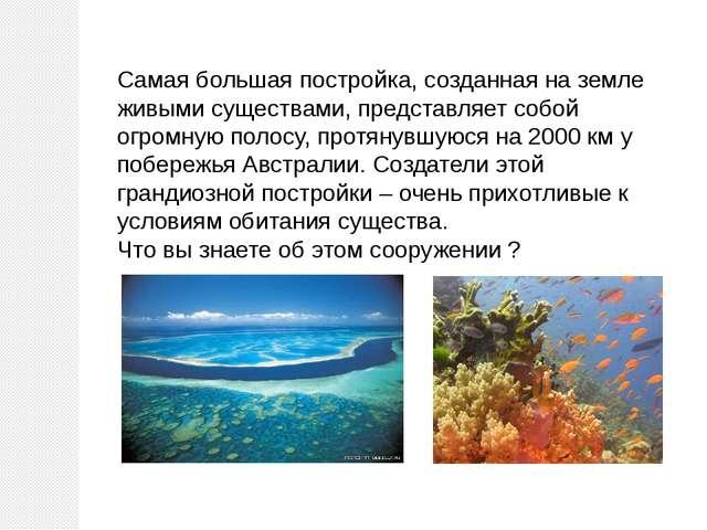 Самая большая постройка, созданная на земле живыми существами, представляет с...