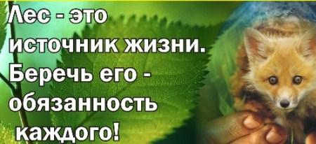 C:\Users\Elena\Desktop\ПОЖАР,ЛЕС,\les.jpg