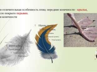 Главная отличительная особенность птиц: передние конечности - крылья, а всё т