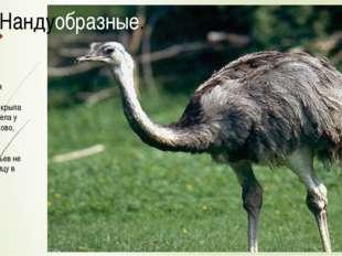 Соотношения несущей поверхности крыла и размеров тела у этих птиц таково, что