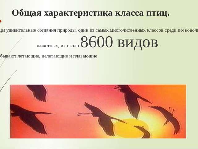Общая характеристика класса птиц. Птицы удивительные создания природы, один и...