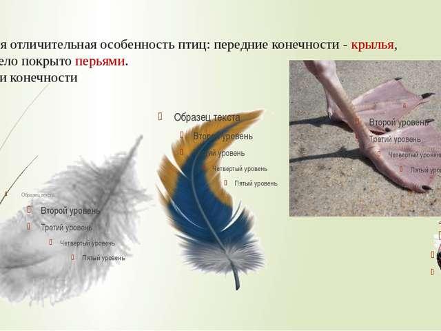 Главная отличительная особенность птиц: передние конечности - крылья, а всё т...