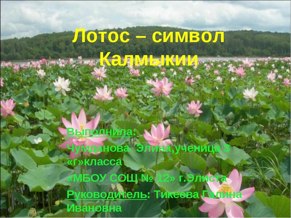 Лотос – символ Калмыкии Выполнила: Чумданова Элина,ученица 3 «г»класса «МБОУ...