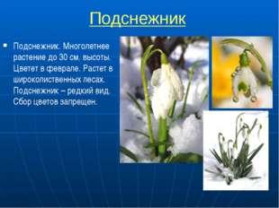Подснежник Подснежник. Многолетнее растение до 30 см. высоты. Цветет в февра