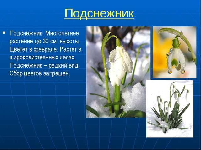 Подснежник Подснежник. Многолетнее растение до 30 см. высоты. Цветет в февра...