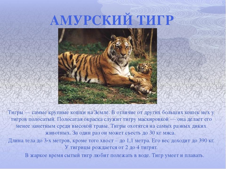 новости Искусство описание характера деревянного тигра при входе сайт