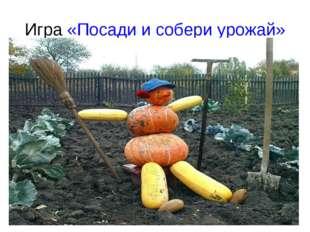 Игра «Посади и собери урожай»
