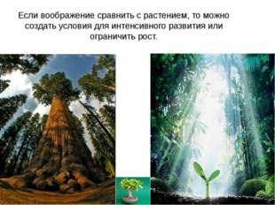 Если воображение сравнить с растением, то можно создать условия для интенсивн