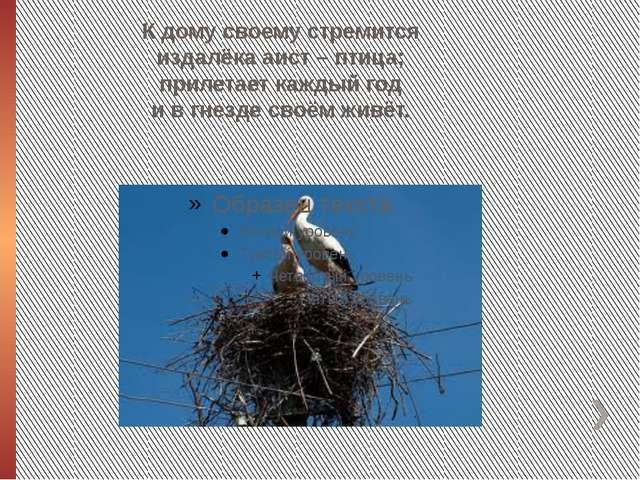 К дому своему стремится издалёка аист – птица; прилетает каждый год и в гнезд...