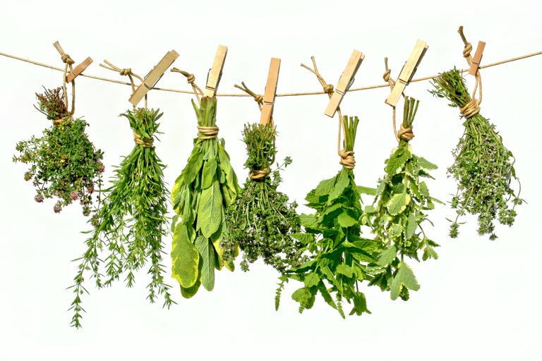 Стоковые фотографии Medicinal Plants, Стоковые фотографии Medicinal Plants, Medicinal Plants Стоковые изображения : Shutterstock