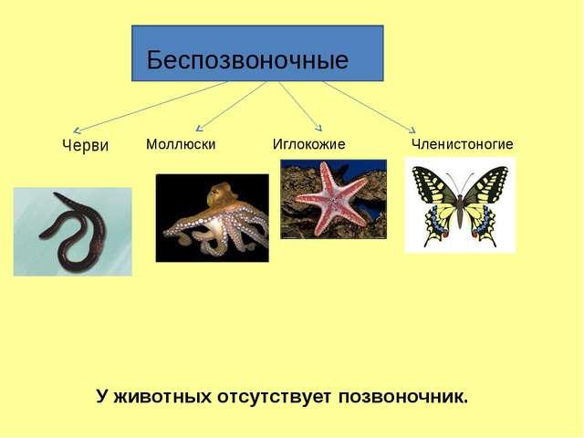 Беспозвоночные Черви Моллюски Иглокожие Членистоногие У животных отсутствует...