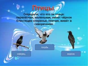 Определи, что это за птица: перелётная, маленькая, имеет чёрное блестящее опе