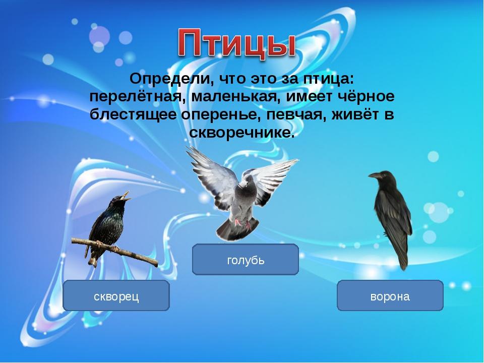 Определи, что это за птица: перелётная, маленькая, имеет чёрное блестящее опе...