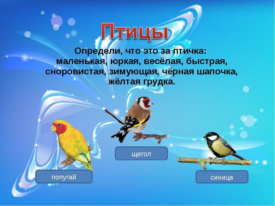 Определи, что это за птичка: маленькая, юркая, весёлая, быстрая, сноровистая,...
