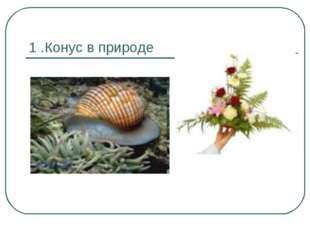 1 .Конус в природе