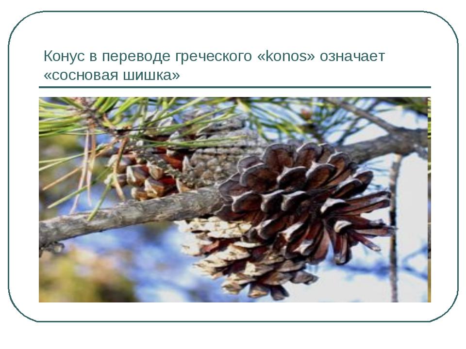 Конус в переводе греческого «konos» означает «сосновая шишка»