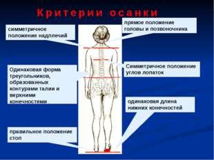 прямое положение головы и позвоночника симметричное положение надплечий Симме